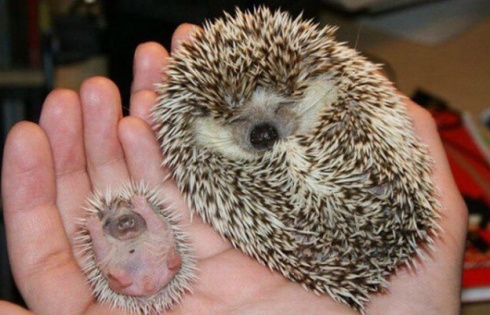 10 Pics of Animals And Their Adorable Copies!