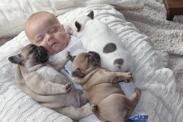 Dessert Time! 13 Incredibly Cute Photos of Babies And Puppies!
