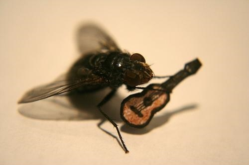 Incredible Adventures of Mr. Fly! 10 Pics!