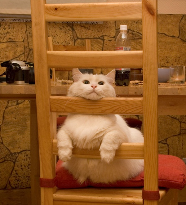 14 Funny Cat Pictures!