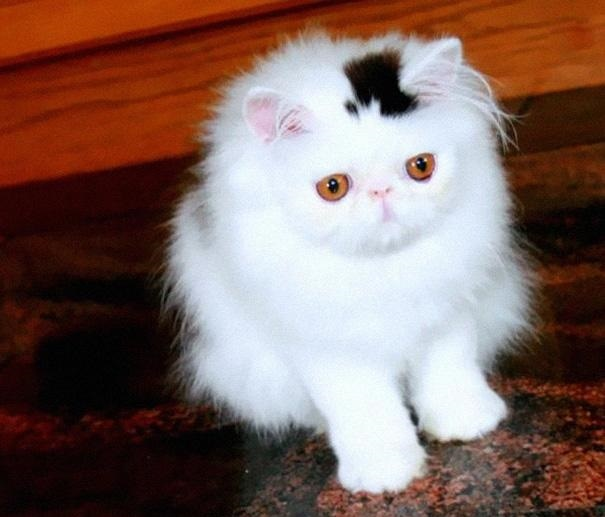 The 10 Most Popular Internet Cats!
