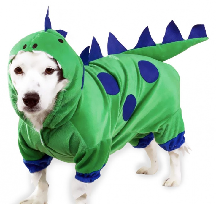 Top 10 Pictures a Dog Wearing Costume