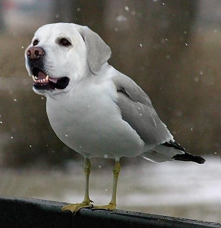 11 Dirds (dogs + birds amazing photoshopped images)!