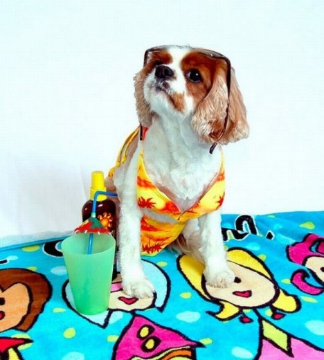 10 Most Adorable And Funny Dogs in Bikinis Ever!