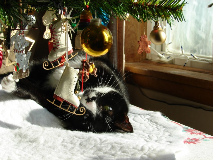 10 Hilarious Cats And Christmas Trees!