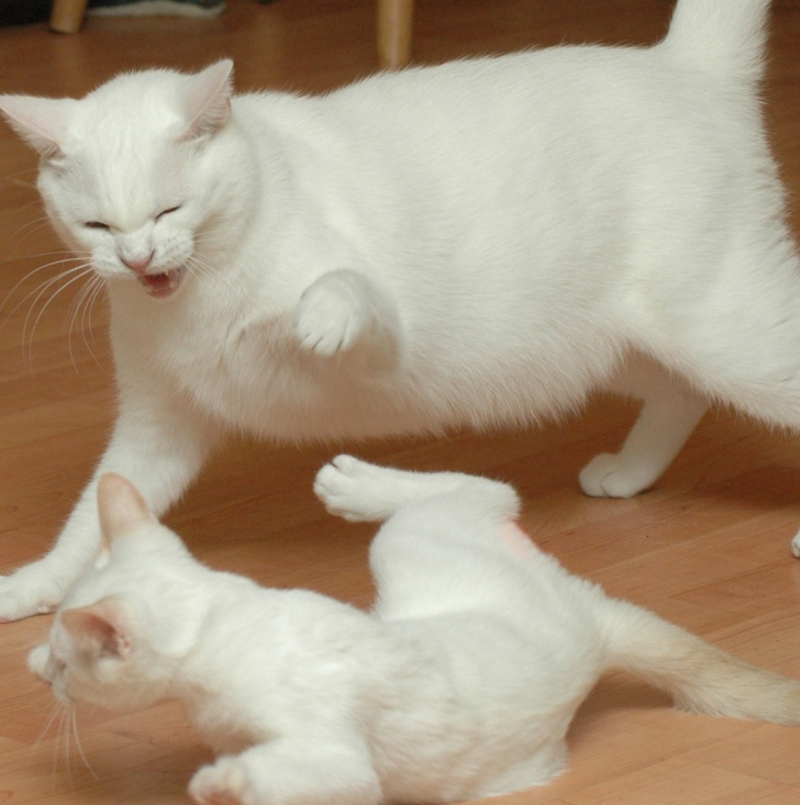 10 Funniest Pictures of Fighting Cats!