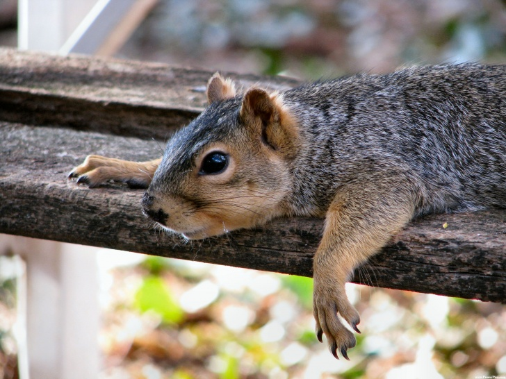 10 Funny Pics of Amazing Squirrels!