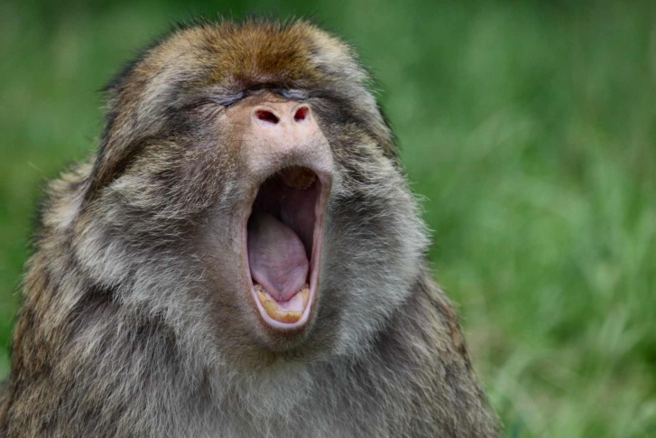 10 Funniest Monkeys Ever!