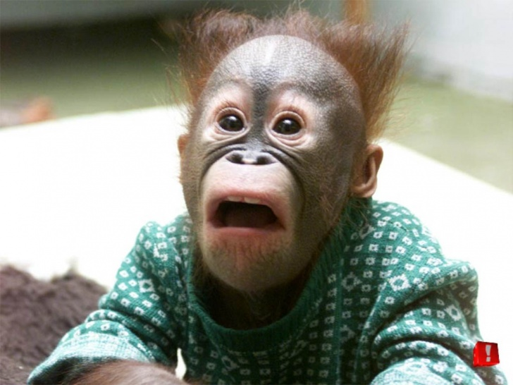 10 Funniest Monkeys Ever!