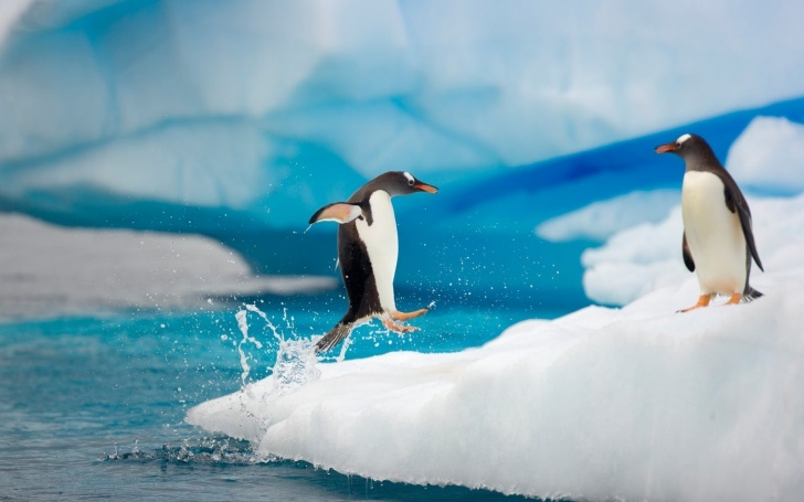 10 Hilarious Pics of Penguins!
