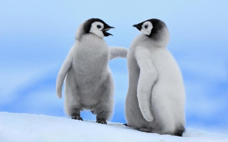 10 Hilarious Pics of Penguins!
