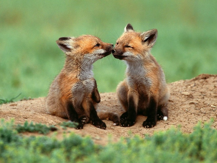 11 Lovely Pets and Wild Animals Kissing!