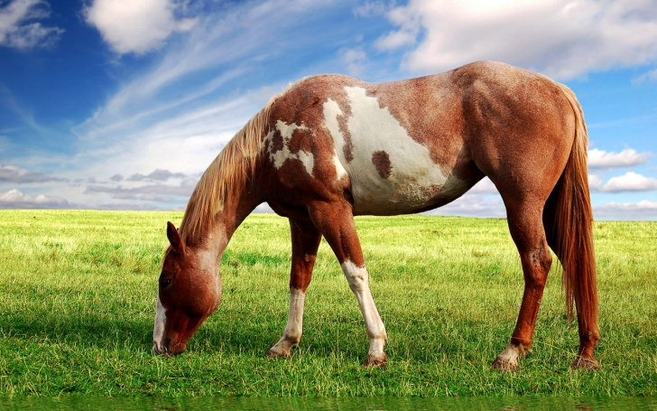 12 Most Beautiful And Stunning Photos of Horses!