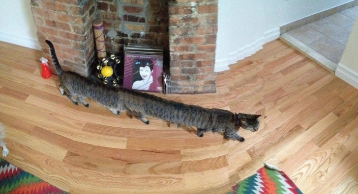 10 Amazingly Funny Panoramic Photo Fails!