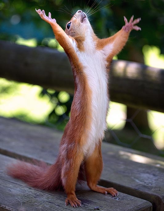 10 Funny Pics of Amazing Squirrels!