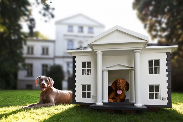 10 Most Luxurious Dog Houses And Beds!