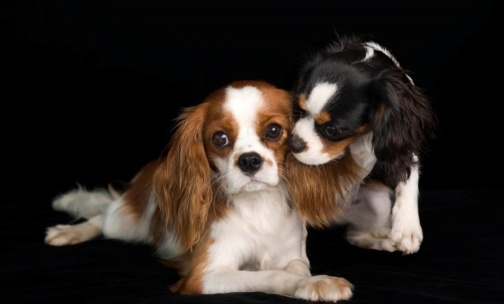 Top Most Expensive Dogs in the World!