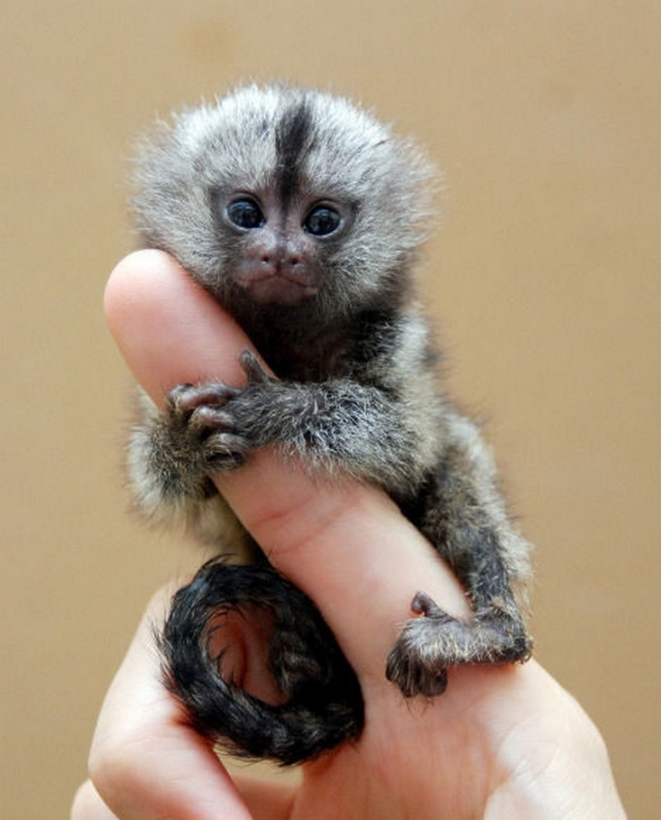 10 Smallest Animals In the World - Part 2!