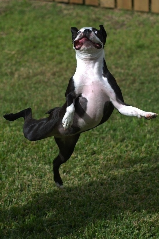 10 Amazingly Funny Pics of Dancing Animals!