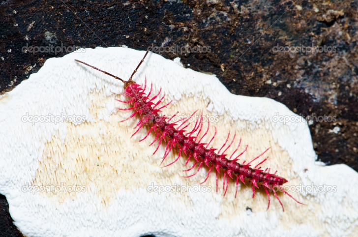 9 Newly-Discovered Animal Species That Look Really Creepy!
