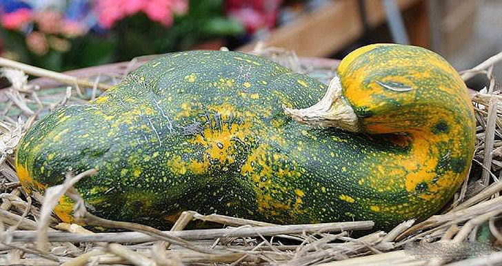 15 Most Interesting Examples of Funny-Shaped Fruits And Vegetables!