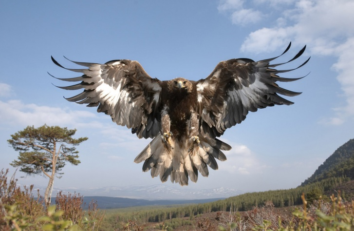 10 Biggest Eagles in the World!