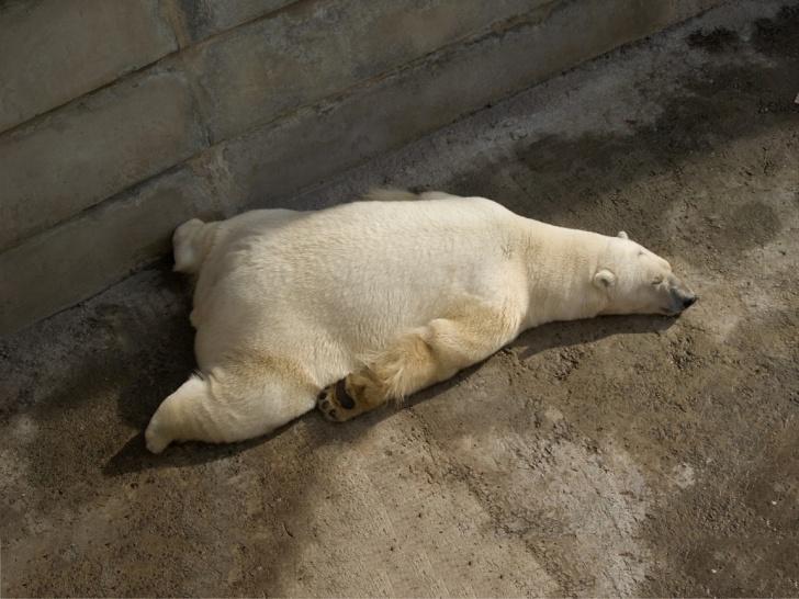 10 Hilarious Pics of Sleeping Animals!