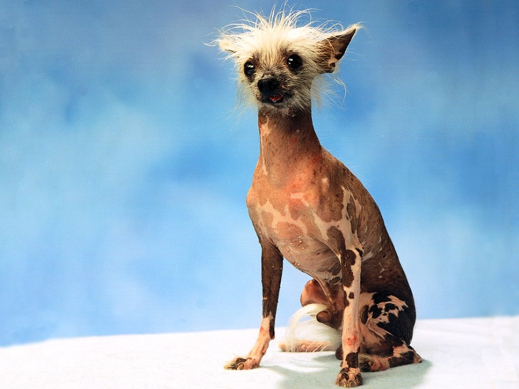 10 Ugliest Dogs In The World!