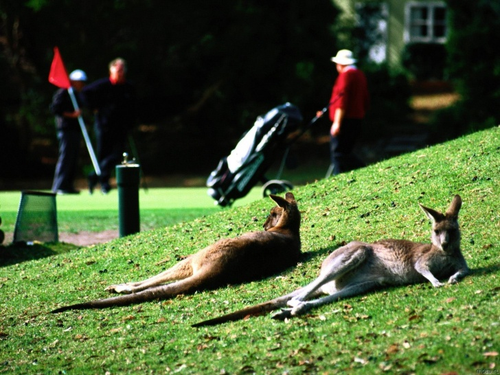 10 Most Amazing And Adorable Pics of Kangaroos!