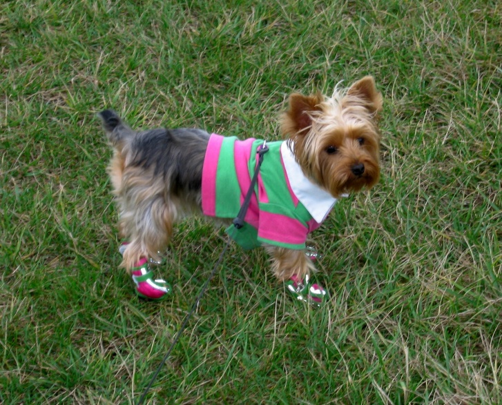 Amazingly Funny Dog Clothes: 10 Cuties!