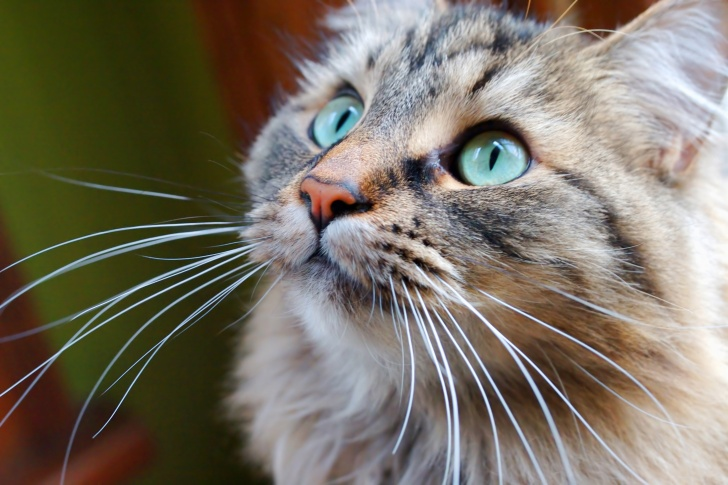 10 Fun And Interesting Facts About Cats!