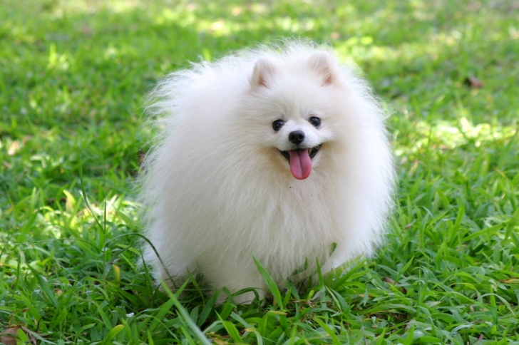 10 Incredibly Cute Fluffies Which Will Not Leave You Cold!